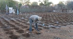 Conservation Agriculture in Tsholotsho, Bulawayo. Image by Hannington Sibanda